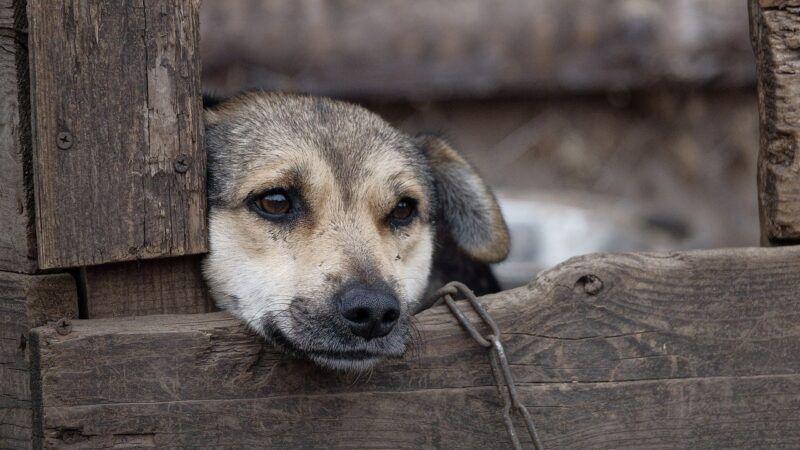 Svojim potpisom možete se priključiti vrijednoj akciji za Hrvatsku bez pasa na lancu