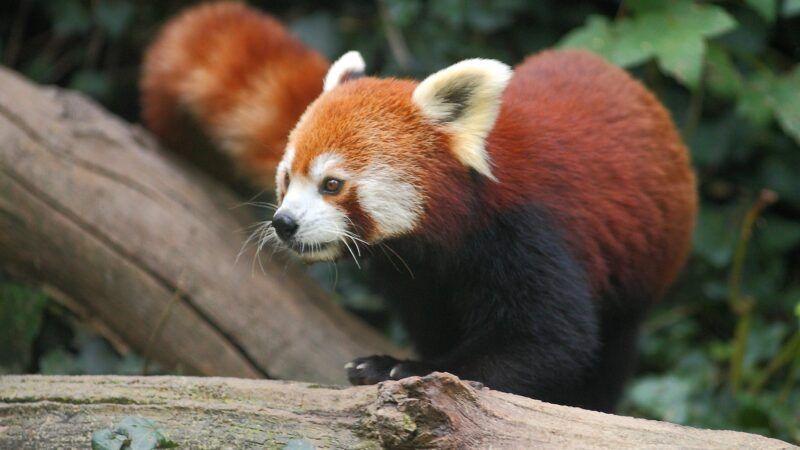 Program u povodu Svjetskog dana divljih vrsta na Edukacijskom trgu Zoološkog vrta grada Zagreba