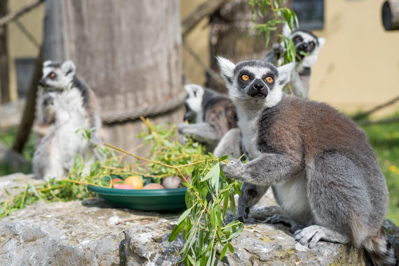 Zekanje u Zoo vrtu tradicionalna je manifestacija koja se održava na Uskrsni ponedjeljak
