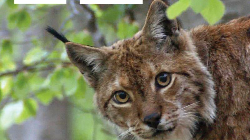 WWF & HIGHLANDER: Hvalevrijedno partnerstvo u predanoj službi očuvanja našeg drugog doma